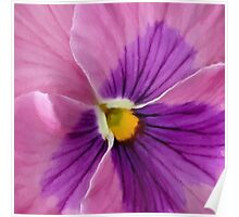 Pink Purple Pansy  Poster