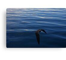 Flying Over an Oily Ocean (Galapagos) Canvas Print