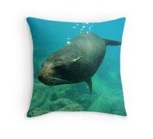 Gliding Towards the Camera (Galapagos) Throw Pillow
