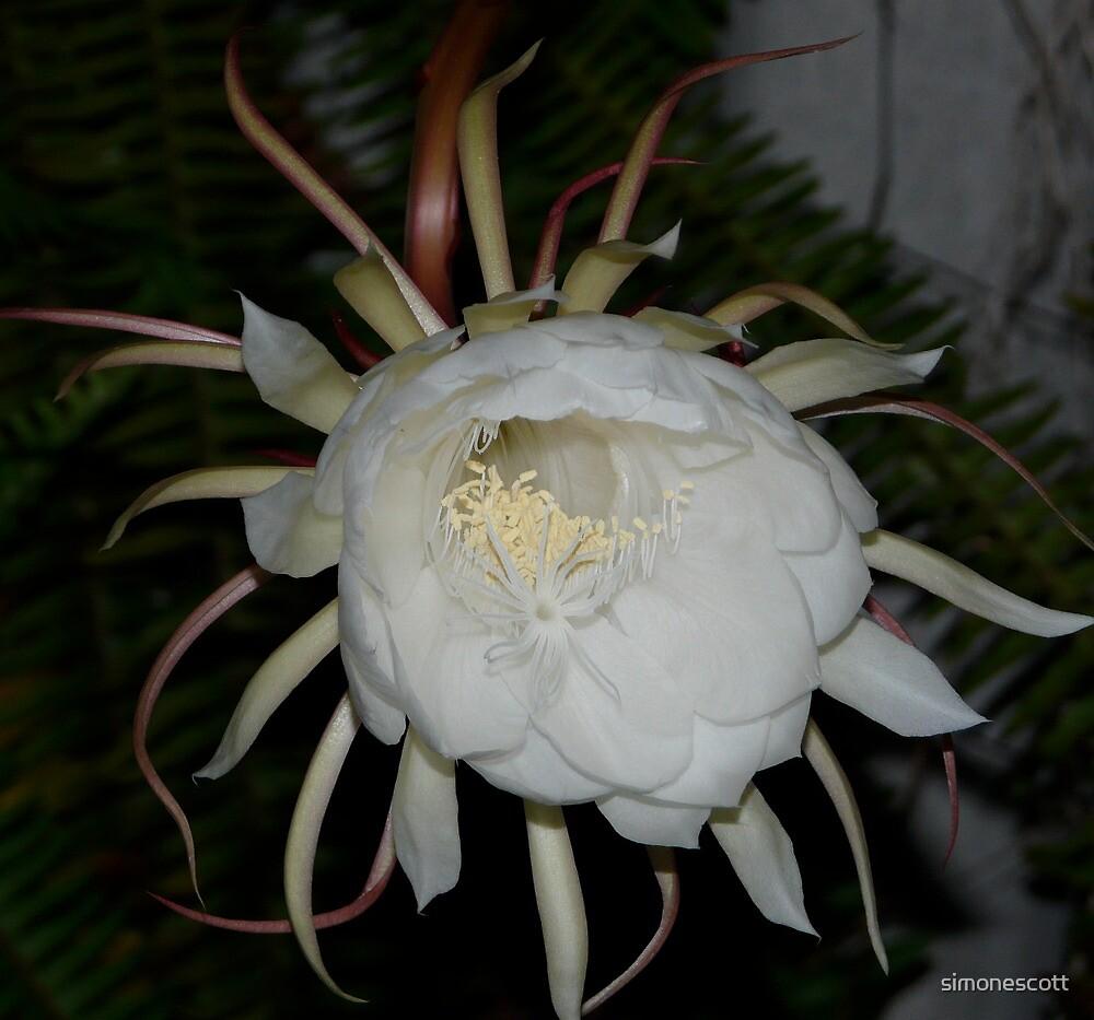 White Queen of the Night by simonescott