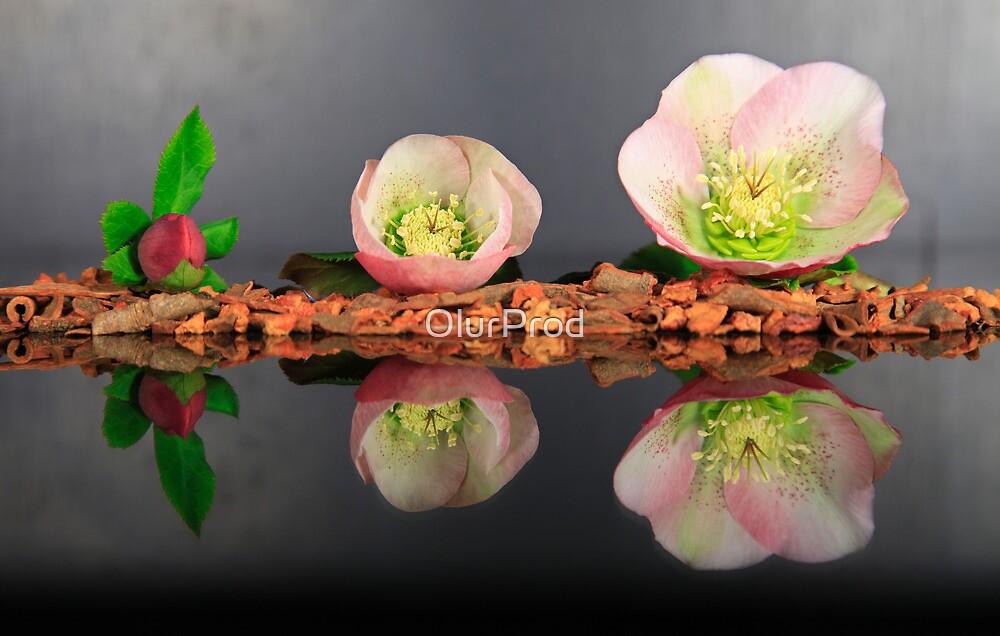Eleboro flower II by OlurProd