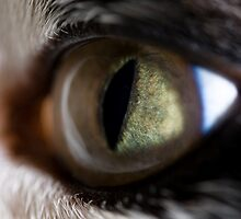 Cat's Eye by Eric Waring
