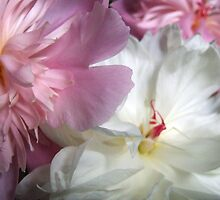 Peonies grow in Mo's garden  by Maureen Zaharie