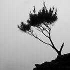 One Tree by Geoff Smith