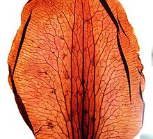 Photo from a Dry  Leave Plant :Colette by Colette Hera  Guggenheim