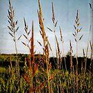 In The Fields by Liis
