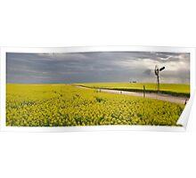Canola fields, Eyre Peninsula, South Australia Poster