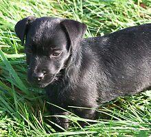 Jessie in The grass by leunig