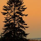 Tree  by Dawn Barger