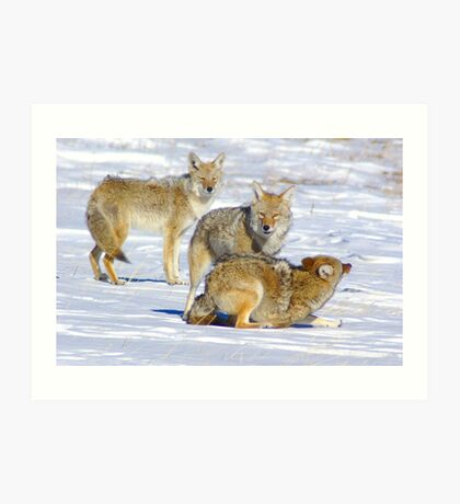 The Playful Pack Art Print