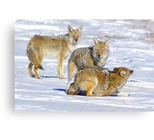 The Playful Pack Canvas Print