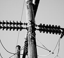 Black and White telephone Pole by naturecraze