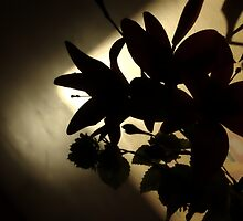 The Darkness in Flowers by blueguitarman