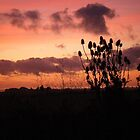 Sunset in Cornwall by SophieSimone