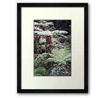 Giant Tree ferns Framed Print