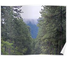 Looking Through the Trees Poster