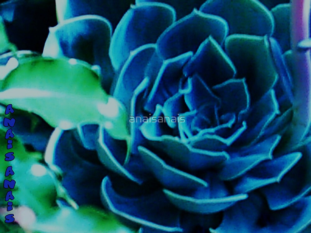 BlueRose by anaisanais