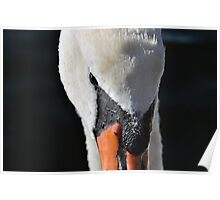 Droplet Covered Swan Poster