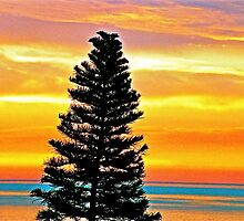 Pine Tree at Sunrise - Summerland, CA by Lexi
