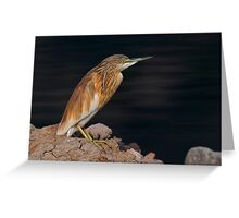 Squacco Poised Greeting Card