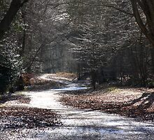 Frozen Pathways by SeeOneSoul