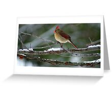 Watching from Above...... Greeting Card