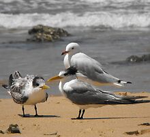 Beach birds by Liz Worth