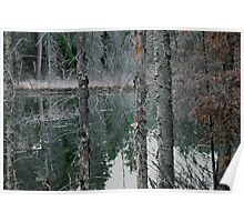 Texture of beaver pond Poster