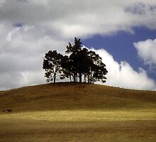 Trees On A Hill by Eve Parry