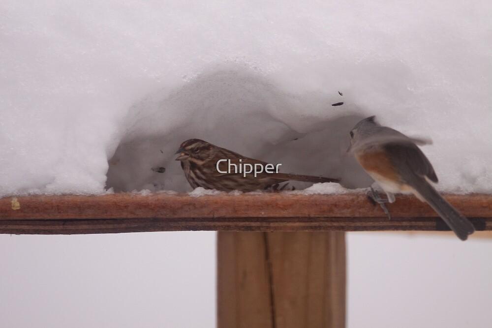Bird Igloo Jan 2010 by Chipper