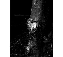 The Giving Tree. Photographic Print