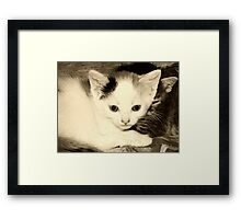 Two for One Framed Print