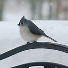 Titmouse in the Winter Storm by Lolabud