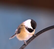 Cutest Little Chickadee by Deborah  Benoit