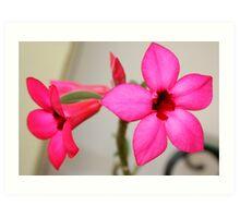 Twin Pink Tropical Floras  Art Print
