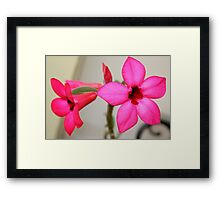 Twin Pink Tropical Floras  Framed Print