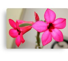 Twin Pink Tropical Floras  Canvas Print
