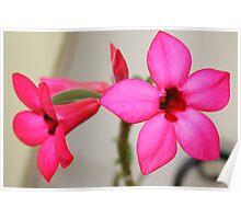 Twin Pink Tropical Floras  Poster
