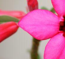 Twin Pink Tropical Floras  Sticker