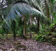 Chaccoben Mayan ruins by tanmari