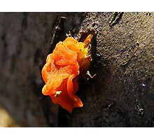 Dragon Fungi Photographic Print