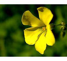 Yellow Delicacy Photographic Print