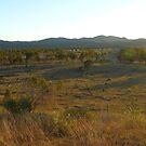 Destroyed land. by amcgr