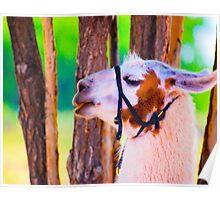 Llama at Hubbell Post Poster