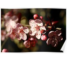 Spring Blossom in Pink Poster