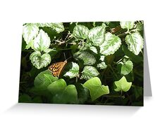 The common brown butterfly visits courtyard garden Greeting Card