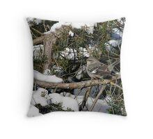 Northern mockingbird - Ottawa, Ontario Throw Pillow