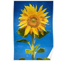 Sunflower - oil on canvas Poster