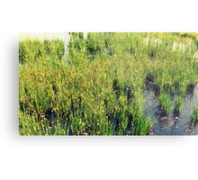 Wild Natural Beauty Metal Print