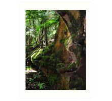 Springbrook National Park Art Print